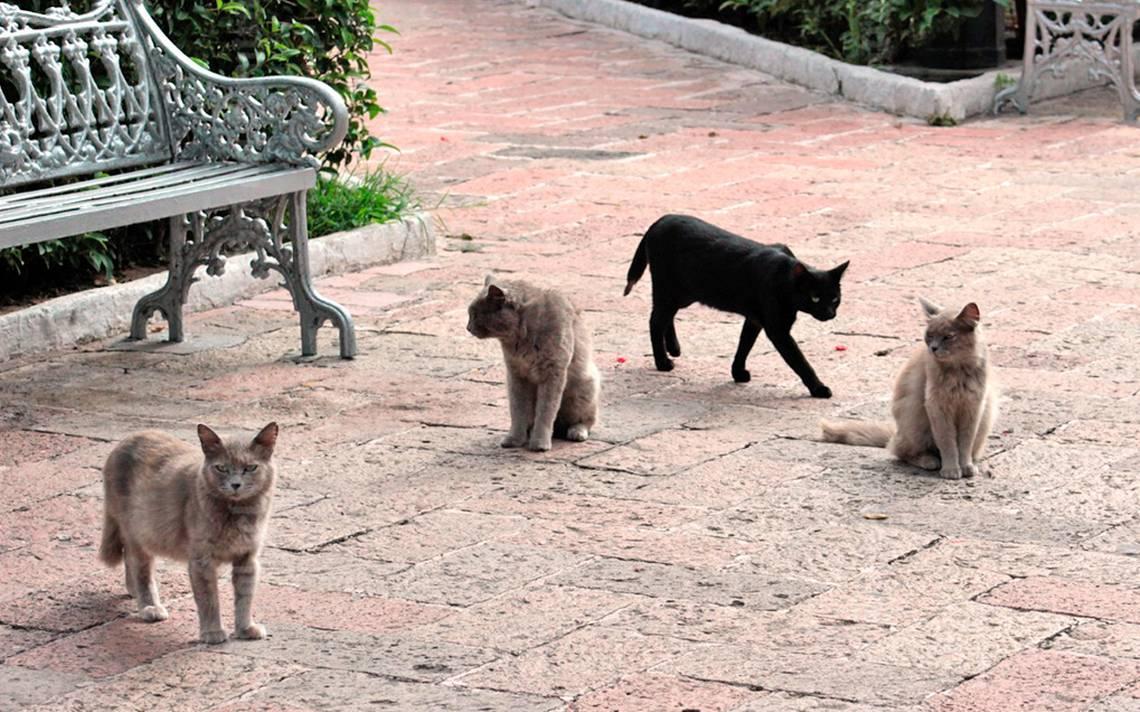 Erradican gatos del Jardín de San Marcos - El Sol del Centro